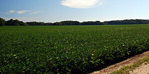 Virginia Farm Land for Sale