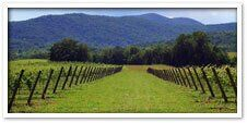 Loudoun Wine Trail