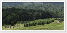 North Carolina Wine Trails