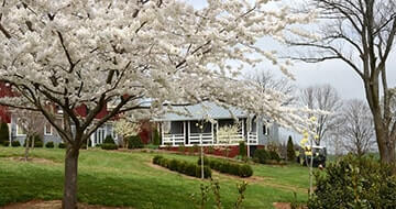 Charlottesville Bed & Breakfasts