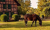 Northern Virginia Horse Farms for Sale